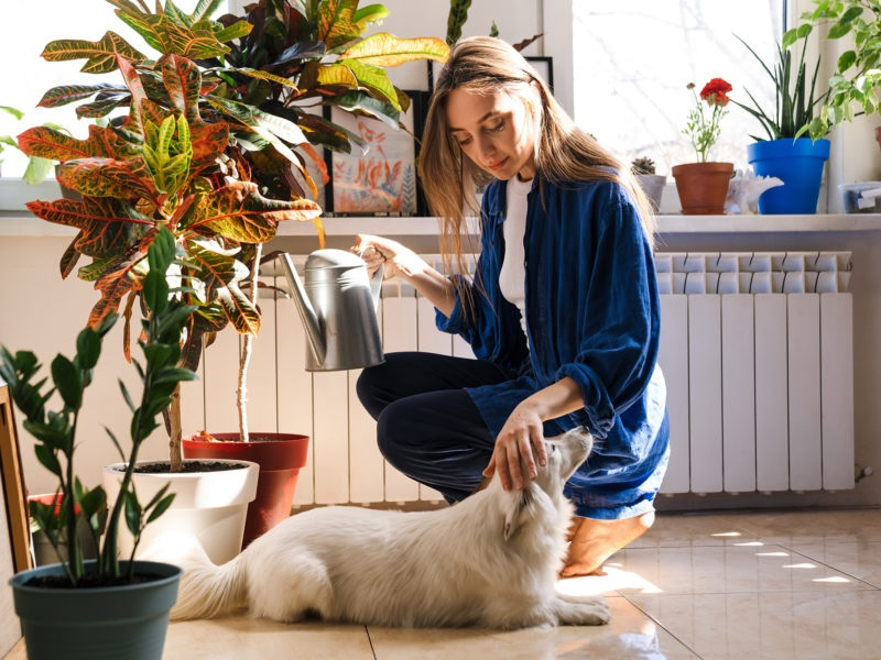 The Simplest Way To Pet-Proof Your Plumbing Whatsoever Efforts